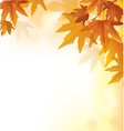 Beautiful autumn yellow background vector image vector image