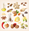 Colorful condiments and spices set vector image