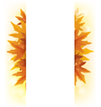 Banner of yellow maple leaves vector image