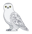 snowy owl bird on a white background vector image vector image