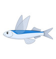 flying fish on a white background vector image vector image