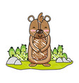 grated happy bear wild animal in the landscape vector image