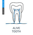 living tooth with vessels and veins icon vector image vector image