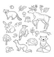 sketch forest animals woodland cute baby animal vector image