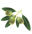 Olives isolated vector image