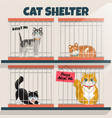cats in cage in cat shelter vector image
