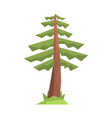 fir tree colorful cartoon vector image