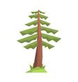 fir tree colorful cartoon vector image vector image