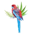 Nice tropical bird vector image vector image