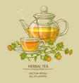 safflower tea vector image vector image