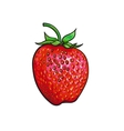 Ripe strawberry isolated on white background vector image