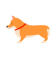 sad dog welsh corgi flat vector image vector image