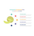 green melon infographic template concept with vector image vector image