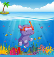 hippo snorkeling in underwater sea vector image