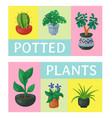 house flowers indoor floriculture poster vector image vector image