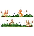 Rabbits being happy in the garden