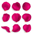 realistic detailed 3d red rose petals set vector image