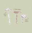 fungus set hand draw sketch vector image vector image