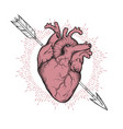 human heart pierced with cherubs arrow hand drawn vector image vector image