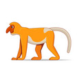 proboscis monkey animal standing on a white vector image vector image