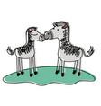 zebra couple over grass in watercolor silhouette vector image vector image