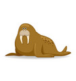 walrus animal standing on a white background vector image