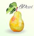Watercolor pear vector image vector image