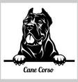 cane corso - peeking dogs - breed face head vector image vector image