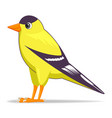 goldfinch bird on a white background vector image vector image