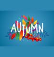 autumn rowan vector image vector image