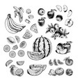 hand drawn set fruits sketch vector image