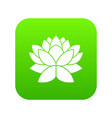 lotus flower icon digital green vector image