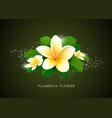 plumeria flower and leaf design vector image