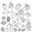 sketch set berries vector image vector image