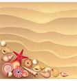 shells sand vector image vector image