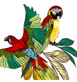 background with colorful tropical parrots vector image