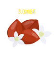 buckwheat seeds cereal grainsflat style vector image