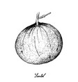 hand drawn of sweet ripe santol fruit on white bac vector image vector image