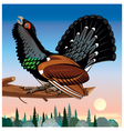wood grouse vector image vector image