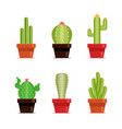decorative cactus set with prickles on the white vector image