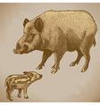 engraving boar retro vector image vector image