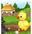Little chicken on a green meadow vector image