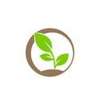 plant ecology bio logo vector image vector image