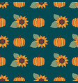 pumpkins and bright sunflowers on dark blue vector image vector image