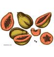 set hand drawn colored papaya vector image