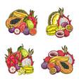 tropical exotic fruits set sketch vector image vector image