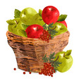 apples watercolor basket red vector image vector image