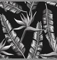 black white bird paradise flowers banana vector image vector image