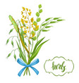 bouquet with herbs and cereal grass floral design vector image vector image