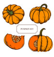 collection of hand drawn pumkins highly vector image